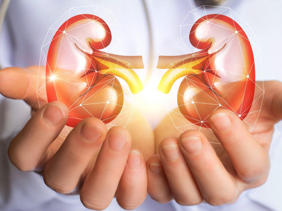 Do you know the Kidney functions?